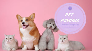 pet psychic medium