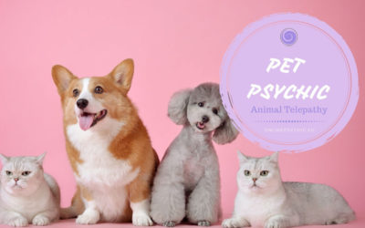 Pet Psychic – Would You Like To Know What Your Pet Is Thinking