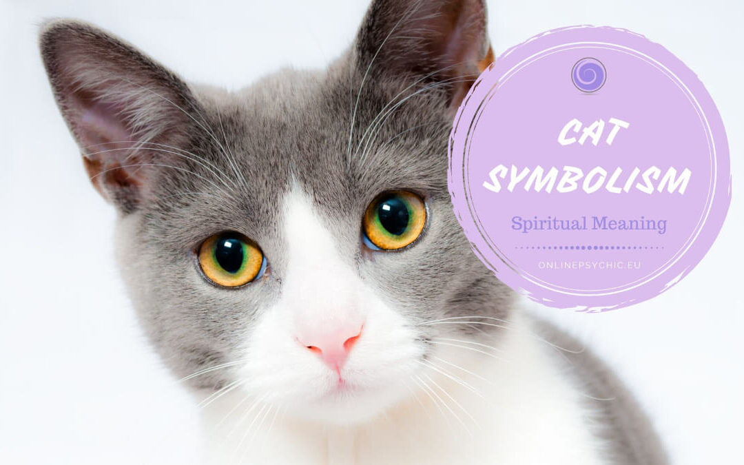 Cat Symbolism and Their Meanings in Spirituality