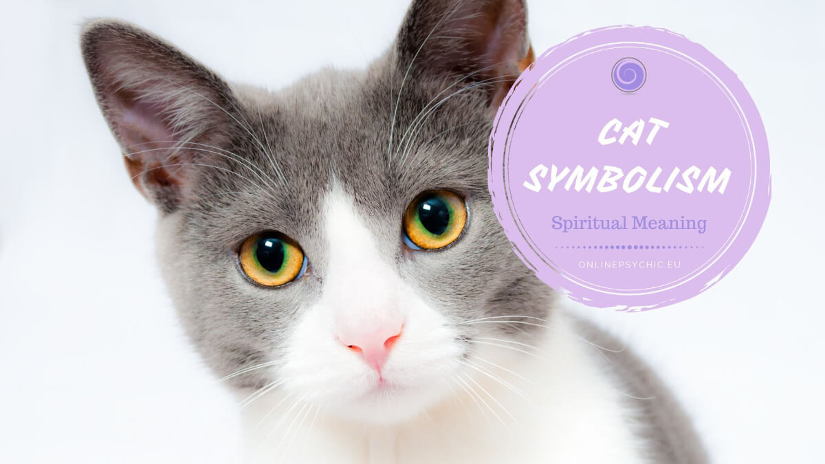 spiritual meaning of cats
