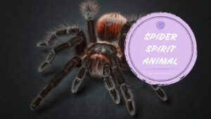 spider spirit animal