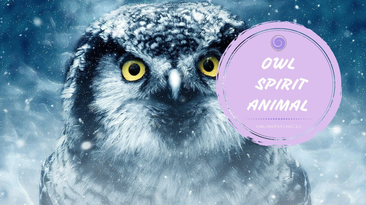 what does an owl spirit animal mean